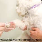 heartworm blood test