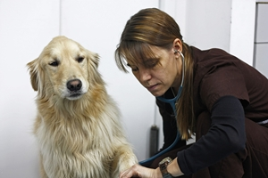 heartworm preventative medicines for dogs