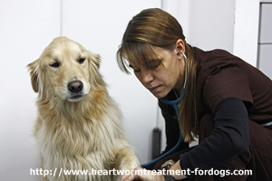 heartworm symptoms