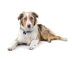 Heartworm for dogs