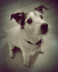 My Dog Murdoch